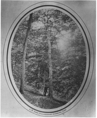 """The Boone Tree - Daniel Boone carved, """"D. Boon CillED A. BAr on tree in the YEAR 1760."""" In 1920, the tree came down during a storm. In 1924, the D.A.R. erected a monument on the site. The gentleman in the photo is John Allison."""