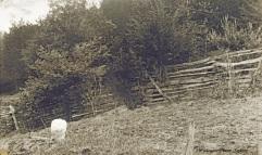Jesse Dunkin grave